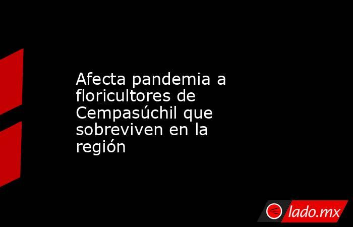 Afecta pandemia a floricultores de Cempasúchil que sobreviven en la región. Noticias en tiempo real