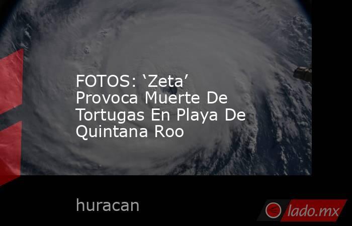 FOTOS: 'Zeta' Provoca Muerte De Tortugas En Playa De Quintana Roo. Noticias en tiempo real