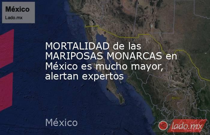 MORTALIDAD de las MARIPOSAS MONARCAS en México es mucho mayor, alertan expertos. Noticias en tiempo real