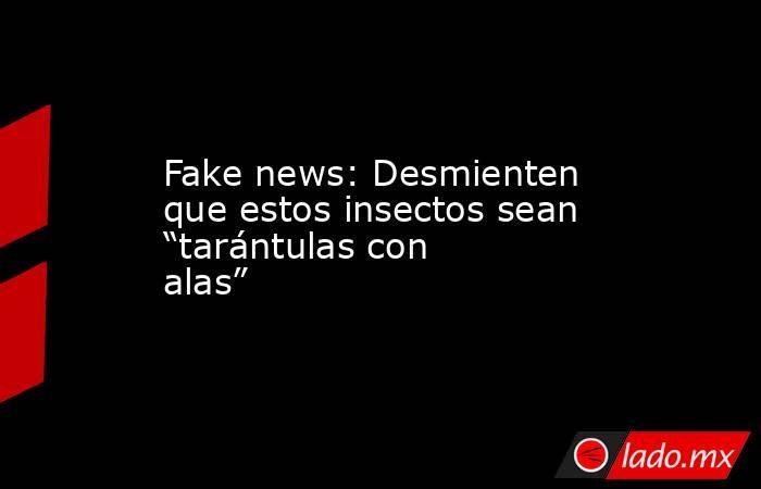 """Fake news: Desmienten que estos insectos sean """"tarántulas con alas"""". Noticias en tiempo real"""