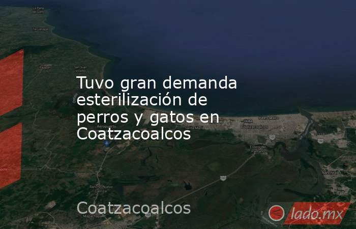 Tuvo gran demanda esterilización de perros y gatos en Coatzacoalcos. Noticias en tiempo real