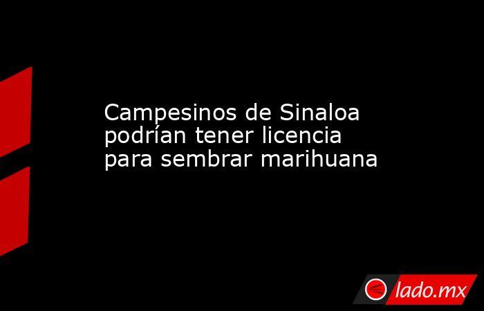 Campesinos de Sinaloa podrían tener licencia para sembrar marihuana. Noticias en tiempo real