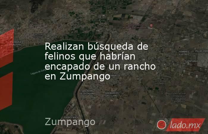 Realizan búsqueda de felinos que habrían encapado de un rancho en Zumpango . Noticias en tiempo real