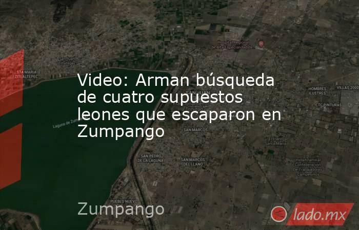 Video: Arman búsqueda de cuatro supuestos leones que escaparon en Zumpango. Noticias en tiempo real