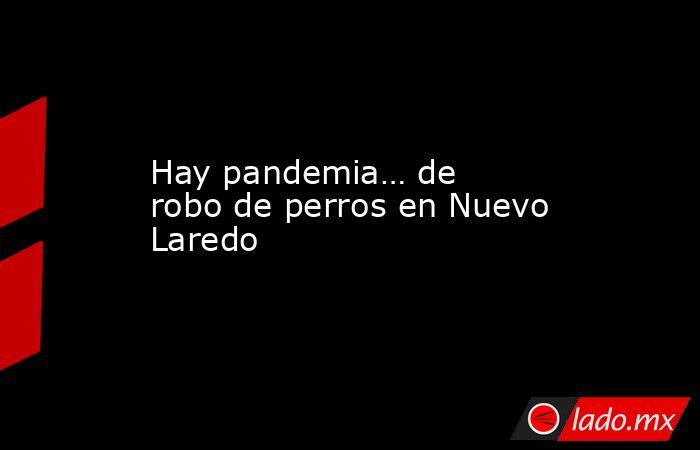 Hay pandemia… de robo de perros en Nuevo Laredo. Noticias en tiempo real