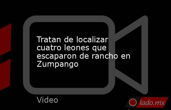 Tratan de localizar cuatro leones que escaparon de rancho en Zumpango. Noticias en tiempo real