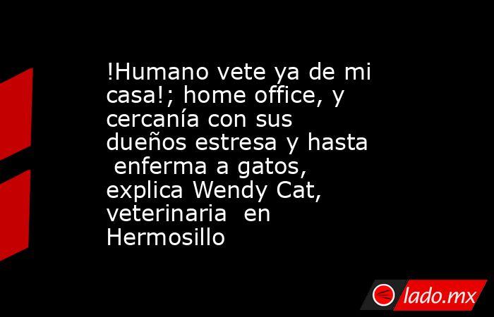 !Humano vete ya de mi casa!; home office, y cercanía con sus dueños estresa y hasta  enferma a gatos, explica Wendy Cat, veterinaria  en Hermosillo. Noticias en tiempo real