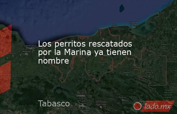 Los perritos rescatados por la Marina ya tienen nombre. Noticias en tiempo real