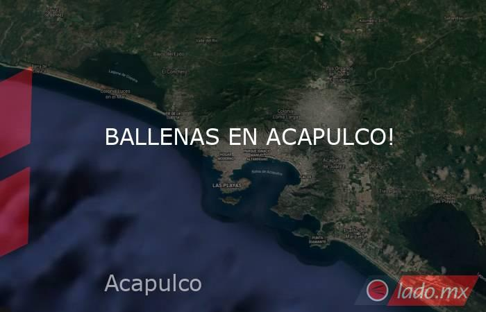 BALLENAS EN ACAPULCO!. Noticias en tiempo real