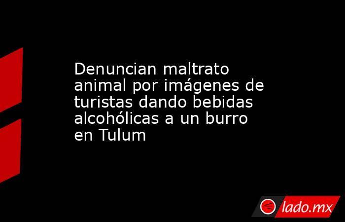 Denuncian maltrato animal por imágenes de turistas dando bebidas alcohólicas a un burro en Tulum. Noticias en tiempo real