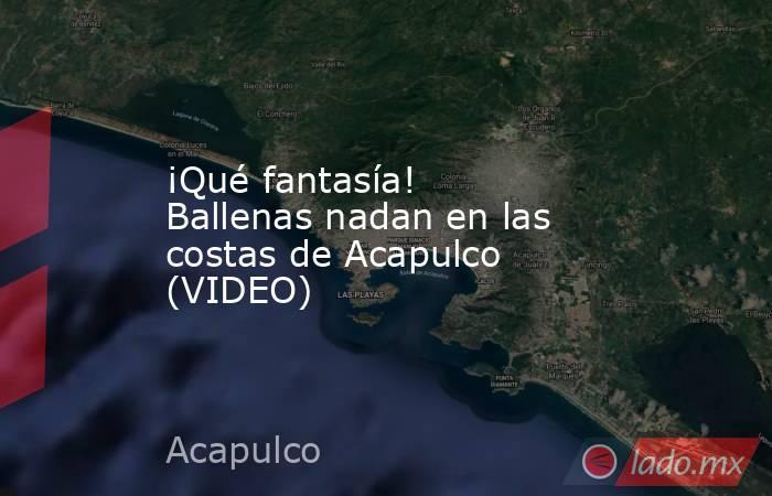 ¡Qué fantasía! Ballenas nadan en las costas de Acapulco (VIDEO). Noticias en tiempo real