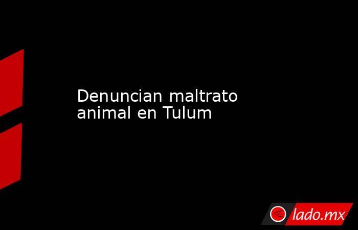 Denuncian maltrato animal en Tulum. Noticias en tiempo real