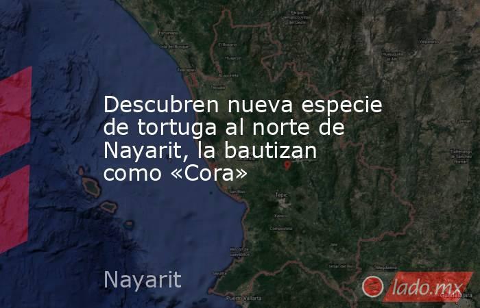 Descubren nueva especie de tortuga al norte de Nayarit, la bautizan como «Cora». Noticias en tiempo real