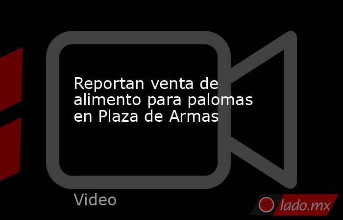 Reportan venta de alimento para palomas en Plaza de Armas. Noticias en tiempo real
