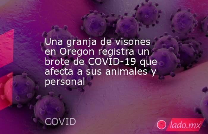 Una granja de visones en Oregon registra un brote de COVID-19 que afecta a sus animales y personal. Noticias en tiempo real