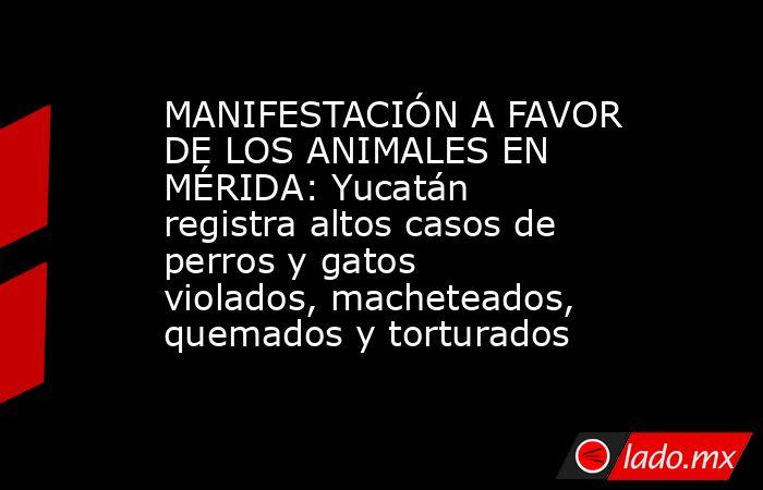 MANIFESTACIÓN A FAVOR DE LOS ANIMALES EN MÉRIDA: Yucatán registra altos casos de perros y gatos violados, macheteados, quemados y torturados. Noticias en tiempo real