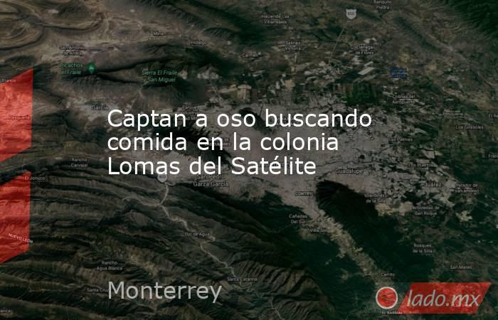 Captan a oso buscando comida en la colonia Lomas del Satélite. Noticias en tiempo real
