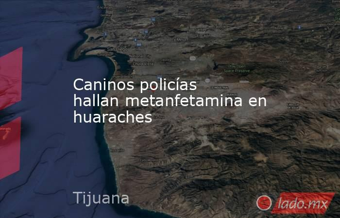 Caninos policías hallan metanfetamina en huaraches. Noticias en tiempo real