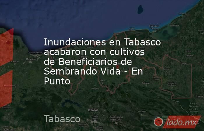 Inundaciones en Tabasco acabaron con cultivos de Beneficiarios de Sembrando Vida - En Punto. Noticias en tiempo real