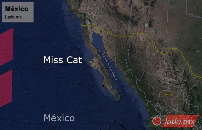 Miss Cat. Noticias en tiempo real