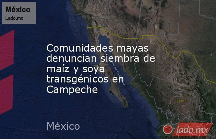 Comunidades mayas denuncian siembra de maíz y soya transgénicos en Campeche. Noticias en tiempo real