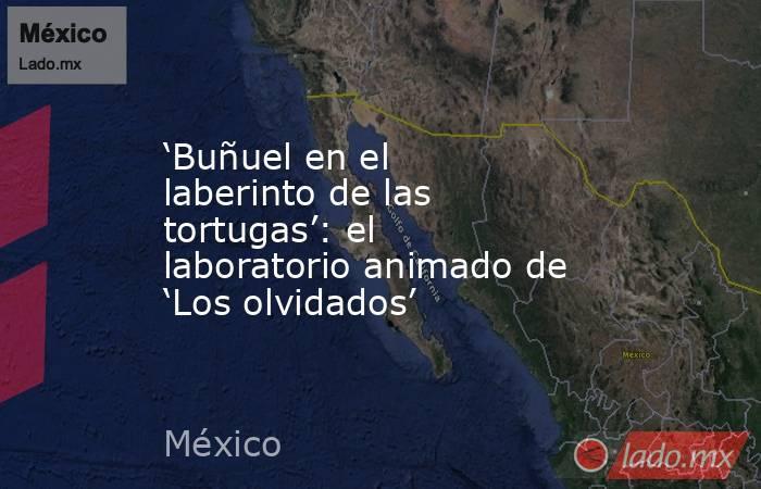 'Buñuel en el laberinto de las tortugas': el laboratorio animado de 'Los olvidados'. Noticias en tiempo real