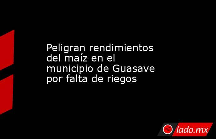 Peligran rendimientos del maíz en el municipio de Guasave por falta de riegos. Noticias en tiempo real