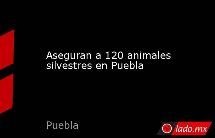 Aseguran a 120 animales silvestres en Puebla. Noticias en tiempo real