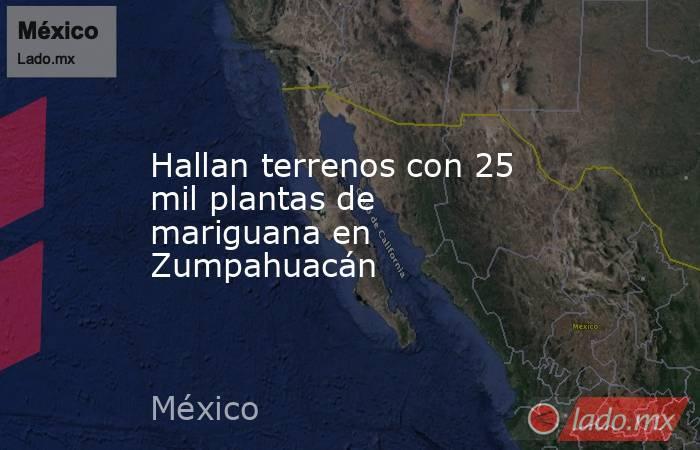 Hallan terrenos con 25 mil plantas de mariguana en Zumpahuacán. Noticias en tiempo real