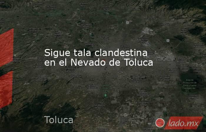 Sigue tala clandestina en el Nevado de Toluca. Noticias en tiempo real
