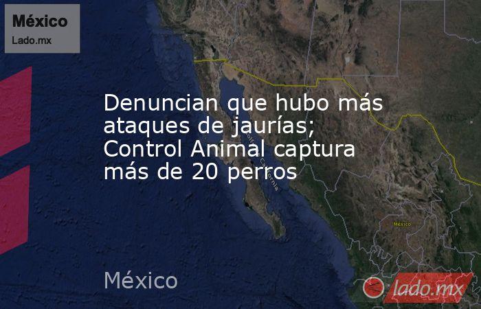 Denuncian que hubo más ataques de jaurías; Control Animal captura más de 20 perros. Noticias en tiempo real