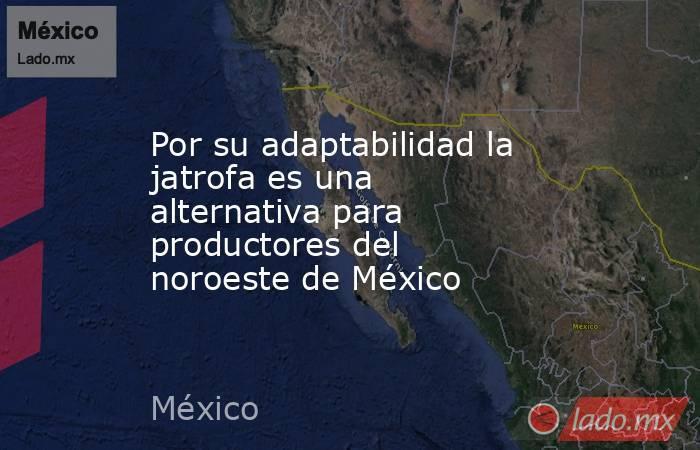 Por su adaptabilidad la jatrofa es una alternativa para productores del noroeste de México. Noticias en tiempo real