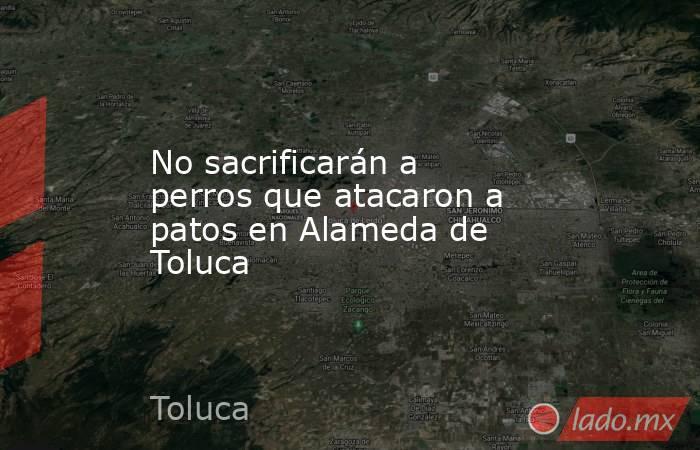 No sacrificarán a perros que atacaron a patos en Alameda de Toluca. Noticias en tiempo real
